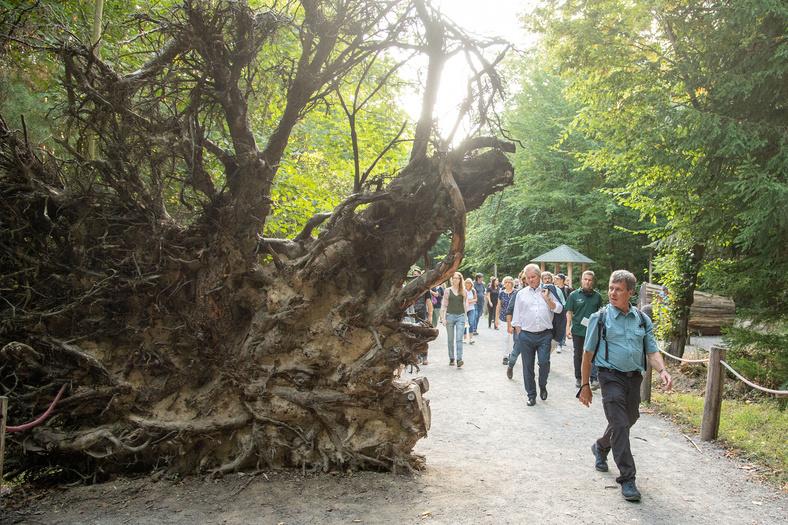 Gruppe von Menschen und Minister Untersteller laufen an großen Baumwurzeln vorbei.